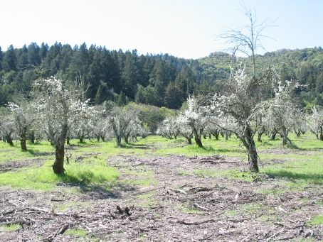 Sonoma Developmental Center Orchard (Jack London)