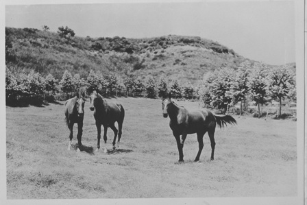 In 2001, California State Parks reviewed the history of equestrian operations at WRSHP.