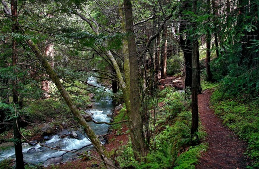 Limekiln State Park, photograph copyrighted by Stephen Woodward, 2009