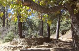 Cuyamaca Rancho State Park is the focus of our Reforest California Campaign