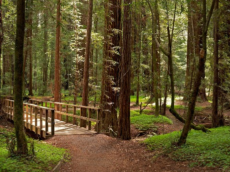 California State Parks and Save The Redwoods League Partnered to Restore Forests