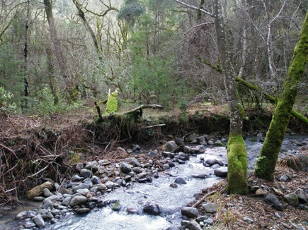Ritchey Creek landscape at Bothe-Napa Valley State Park