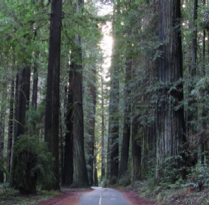 Mattole Road thru Rockefeller Forest