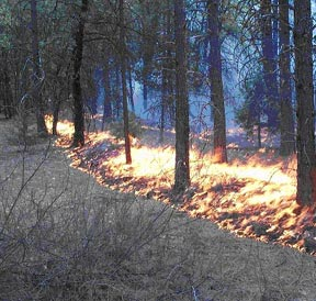 Figure 1. Strip fires were ignited at narrow widths to control fire intensity.