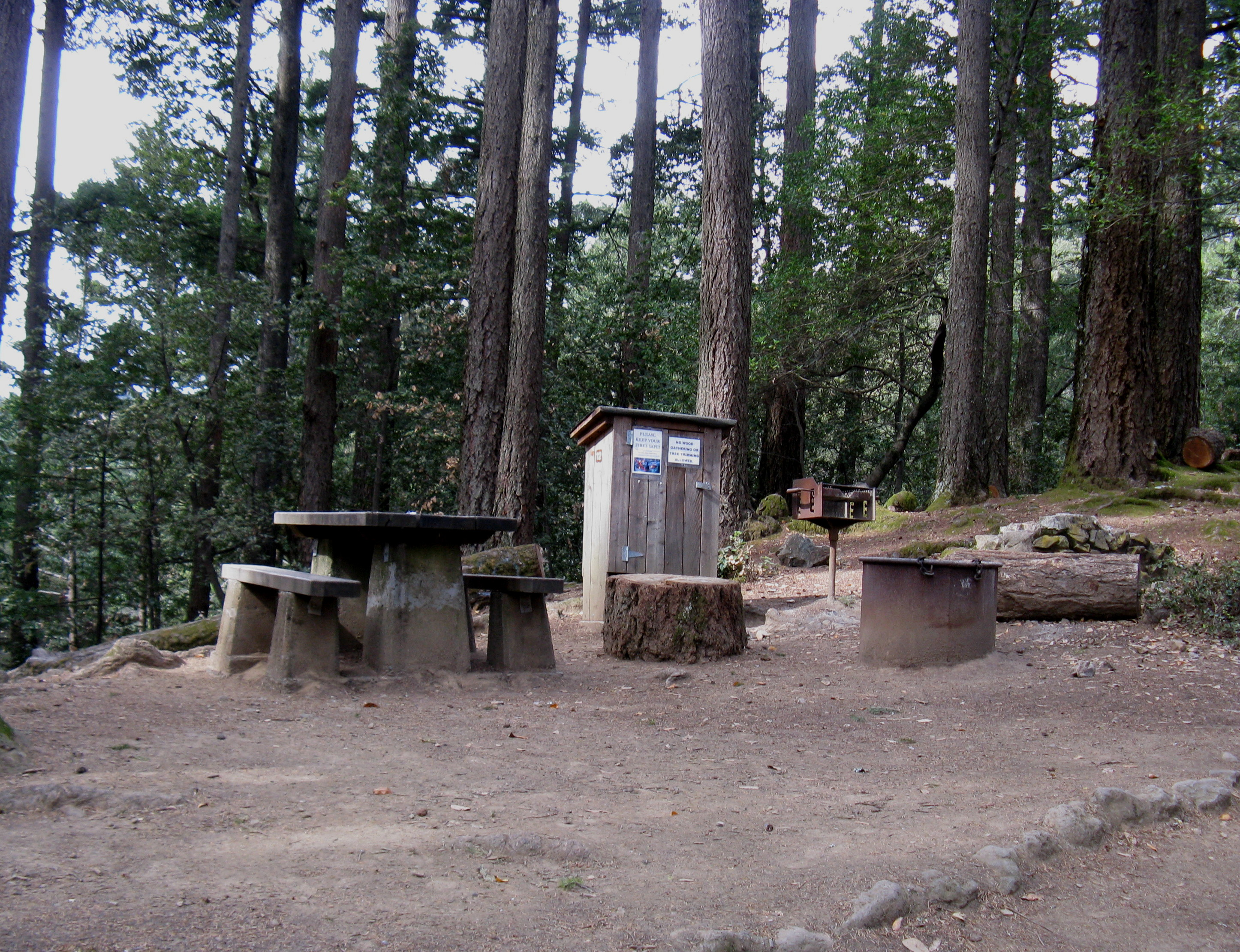 Pantoll Campground Site 12