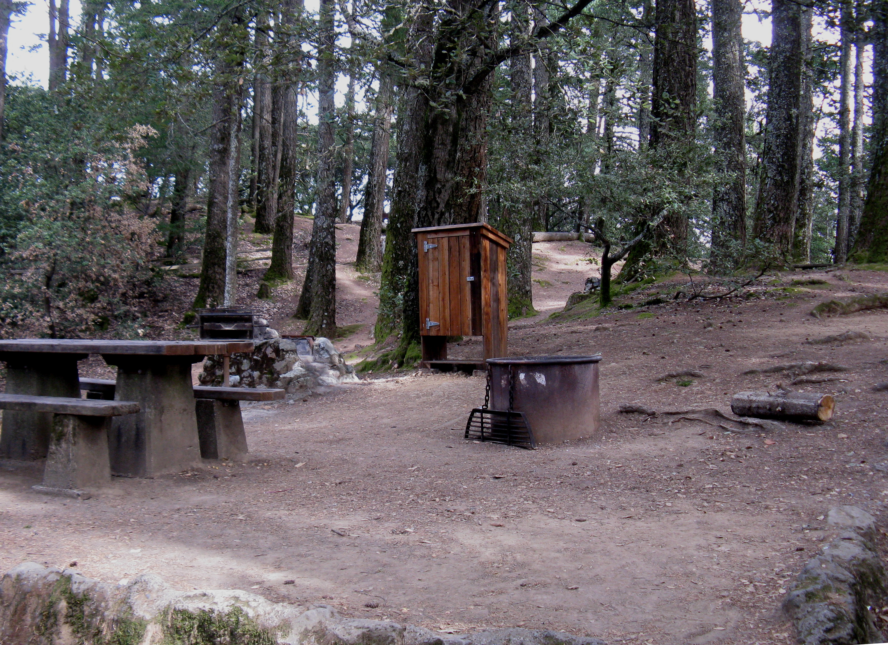 Pantoll Campground Site 8