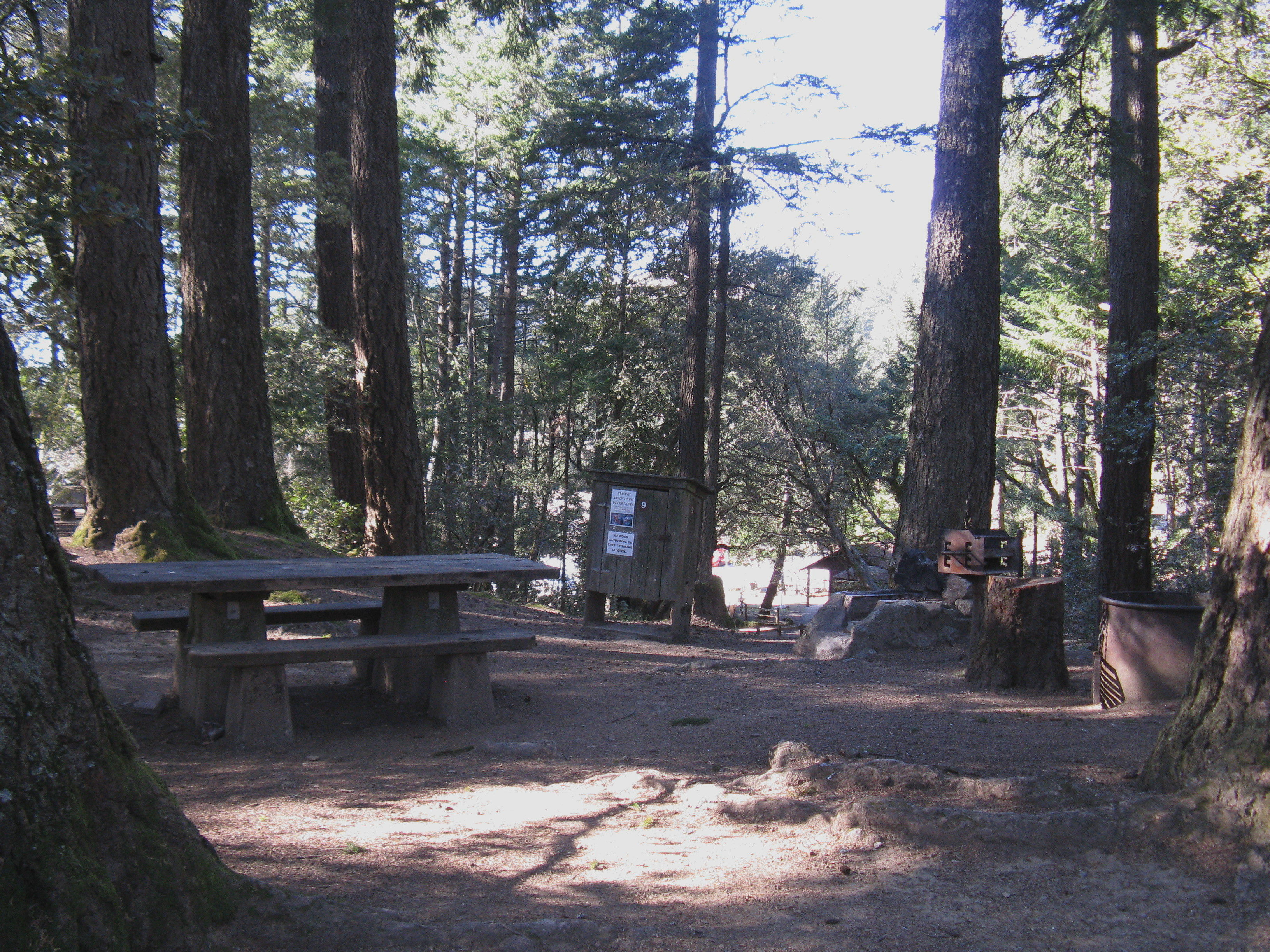Pantoll Campground Site 9
