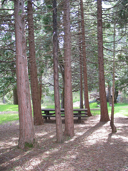 Picnic Site under Trees