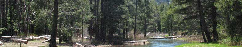 View of creek through forest meadow at Donner Memorial SHP
