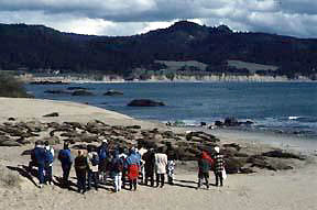 Photo: Visitors to Año Nuevo State Reserve on the beach with elephant seals.