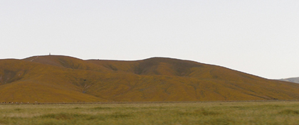 Hillside covered in poppies at Antelope Valley California Poppy Reserve SR