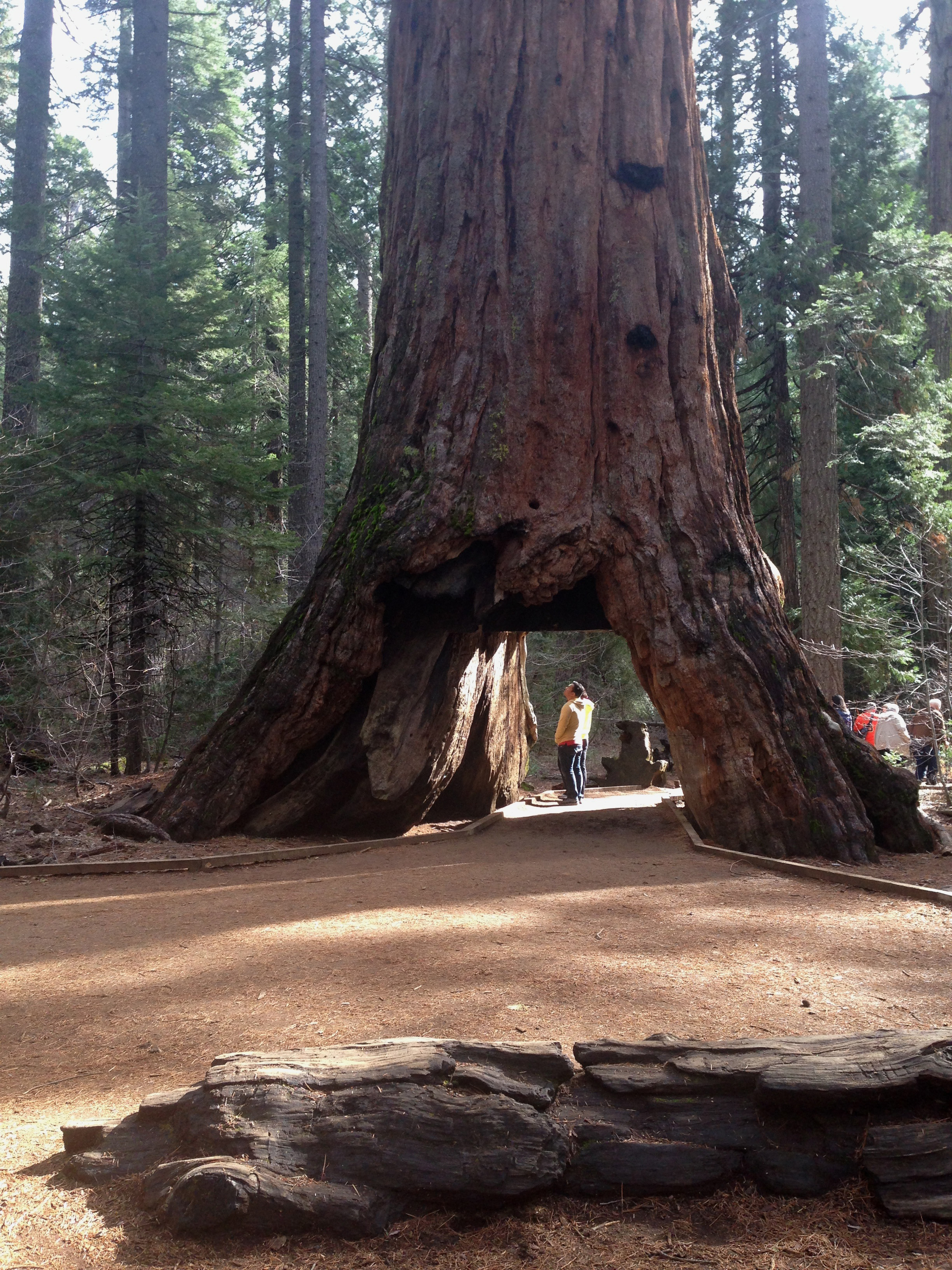 Calaveras Big Trees