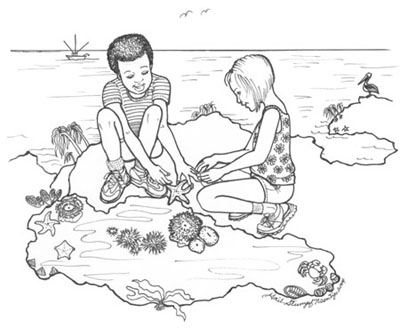 Children at a tide pool