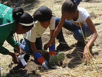 Volunteers in Parks