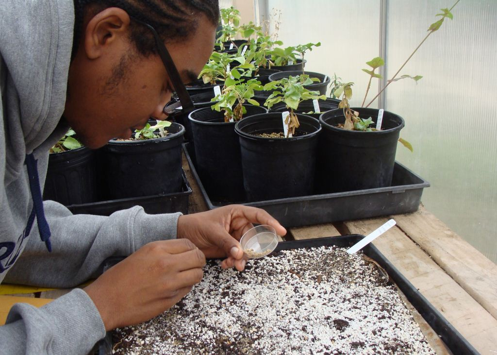 Dorsey High School student working as Greenhouse Intern