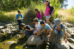 School Group by Stream