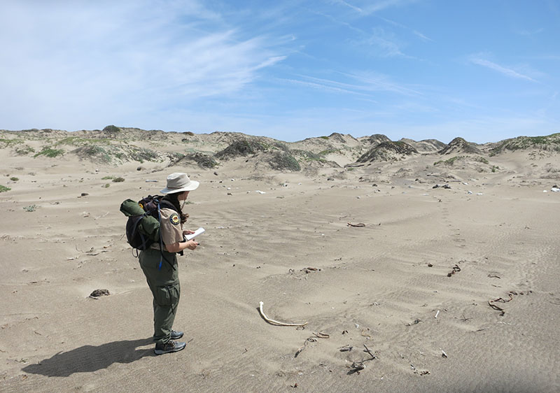 Monitoring of snowy plovers