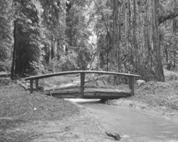Footbridge in Stephens Grove, 1937