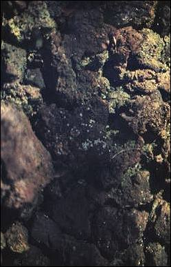 Image of spawning gravels