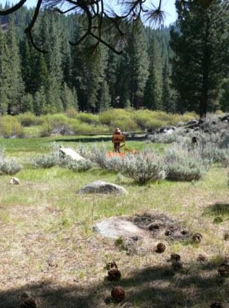 Grover Hot Springs Archaeological Excavations