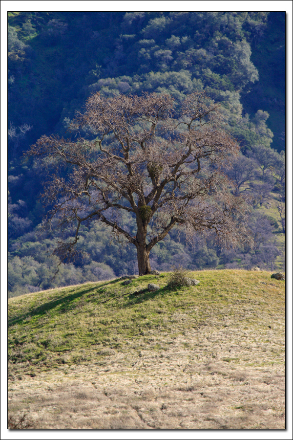 Thumbnail: Lone Tree at Sutter Buttes SP
