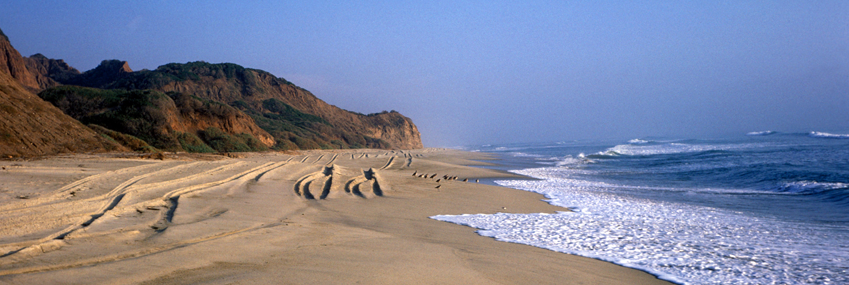 San Onofre Beach Image