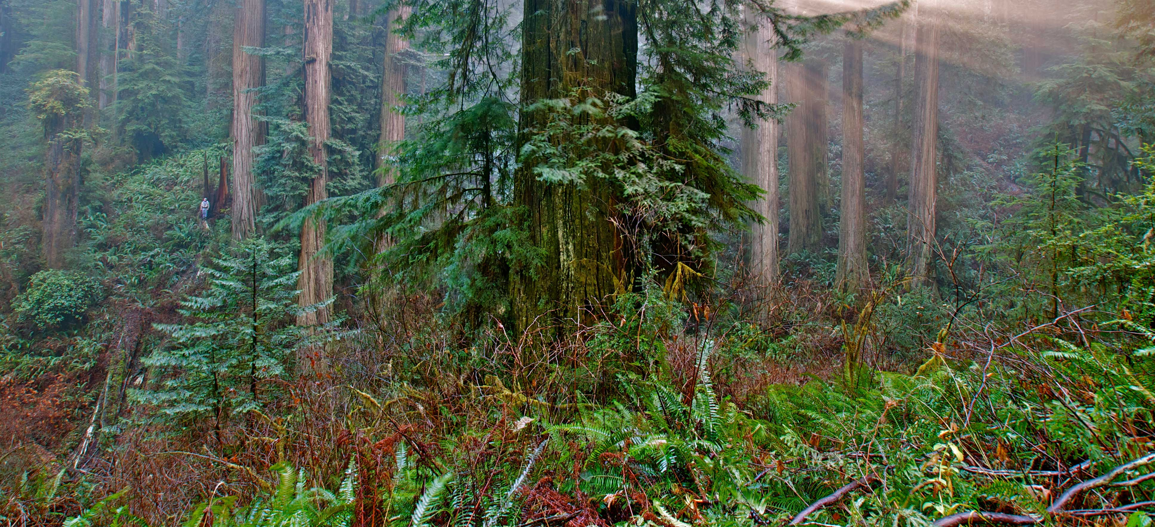 Image from Jedediah Smith Redwoods SP