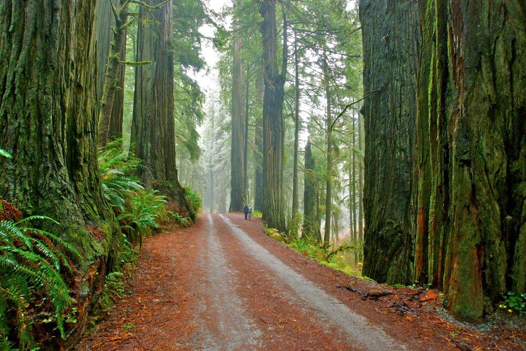 Jedediah Smith Redwoods State Park is the last in a long string of redwood  parks that stretch up Northern California's coast. A few miles inland from  the ...
