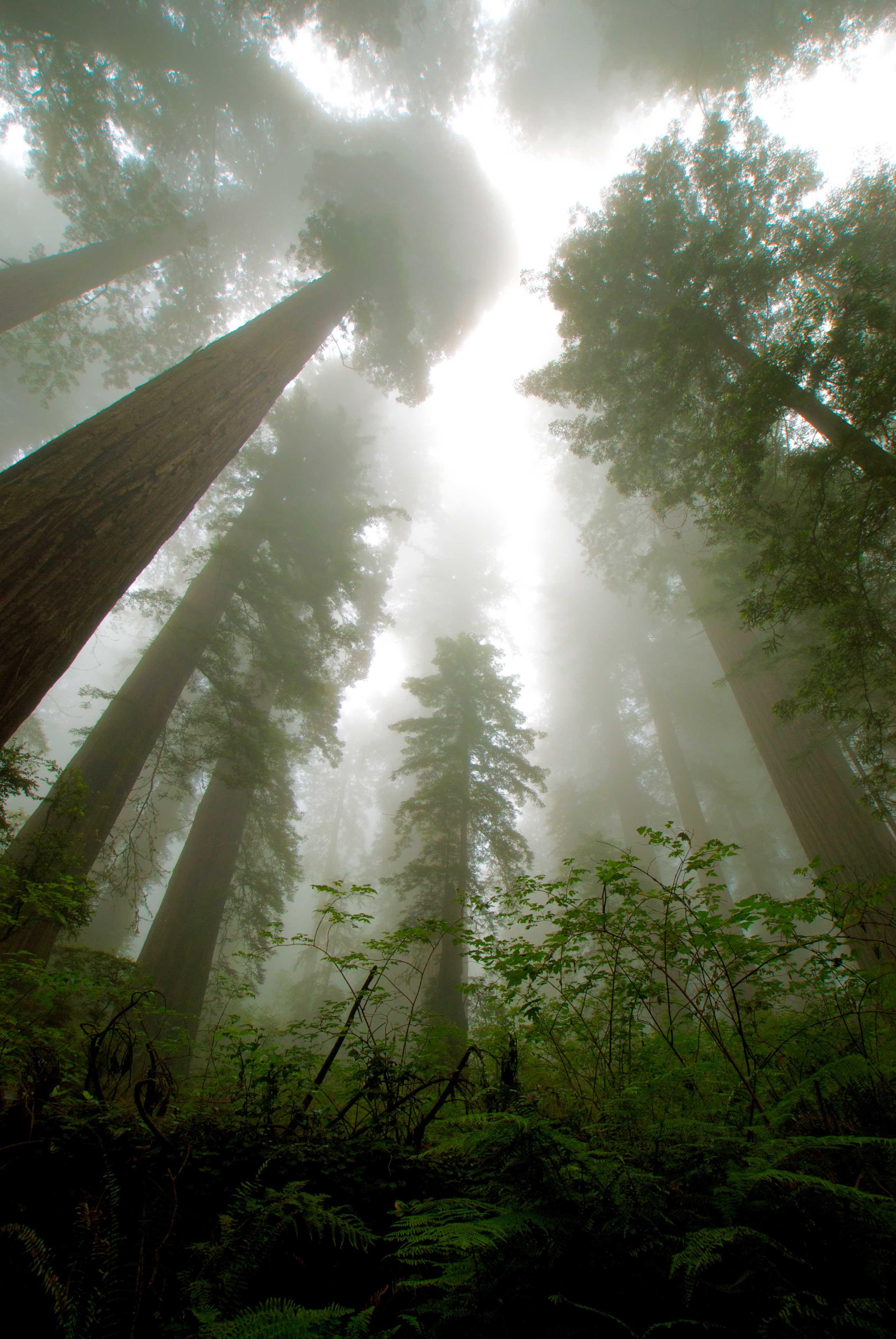 Image from Del Norte Coast Redwoods SP