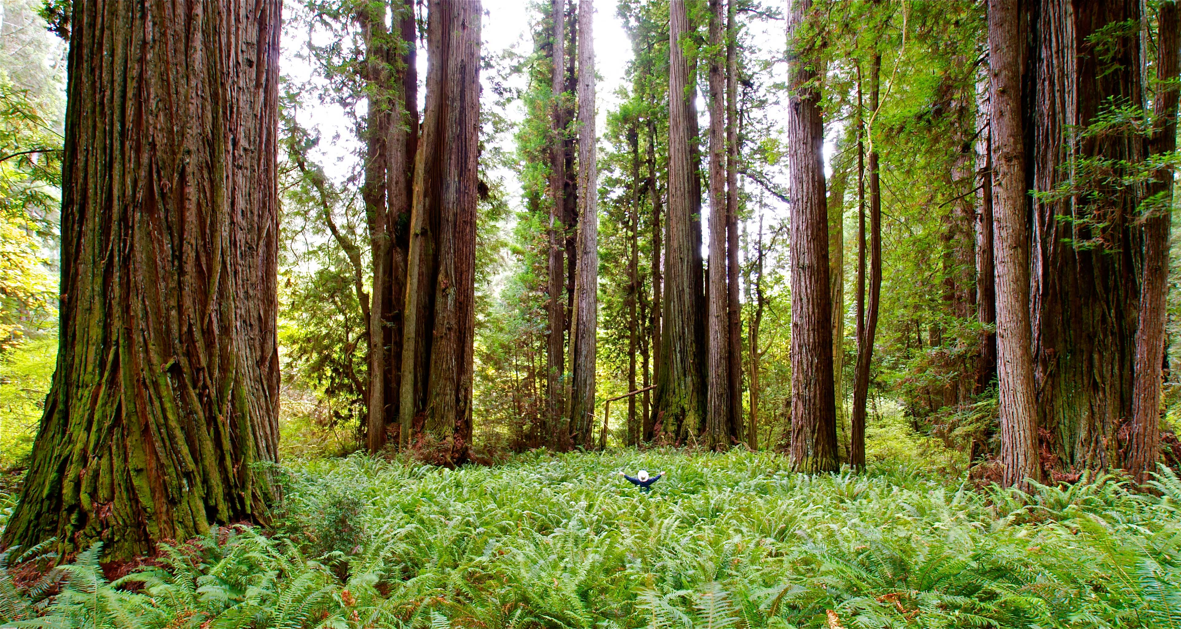 Image from Prairie Creek Redwoods SP