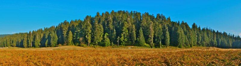 Image from Prairie Creek Redwoods SP