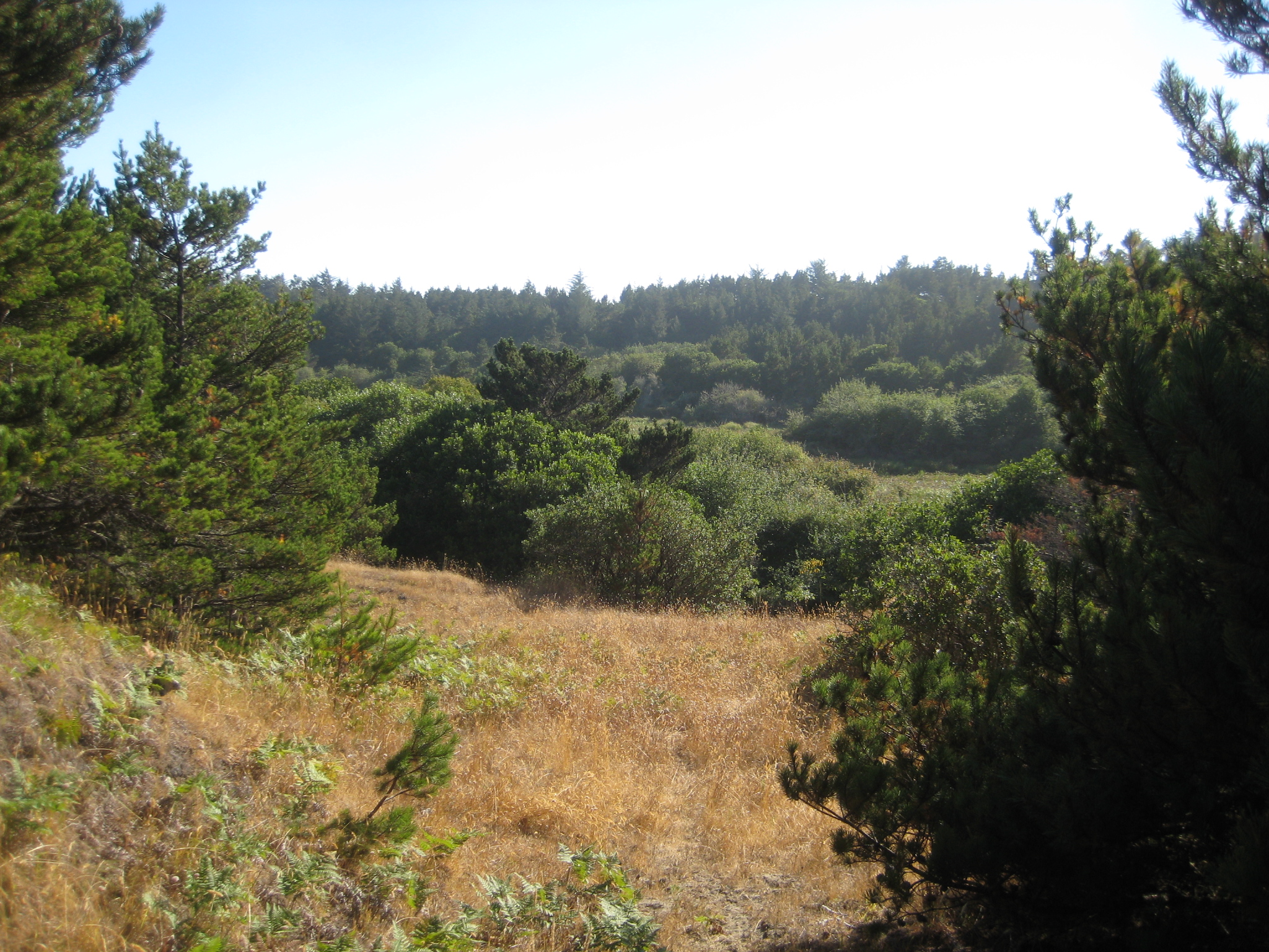 Image from Tolowa Dunes SP