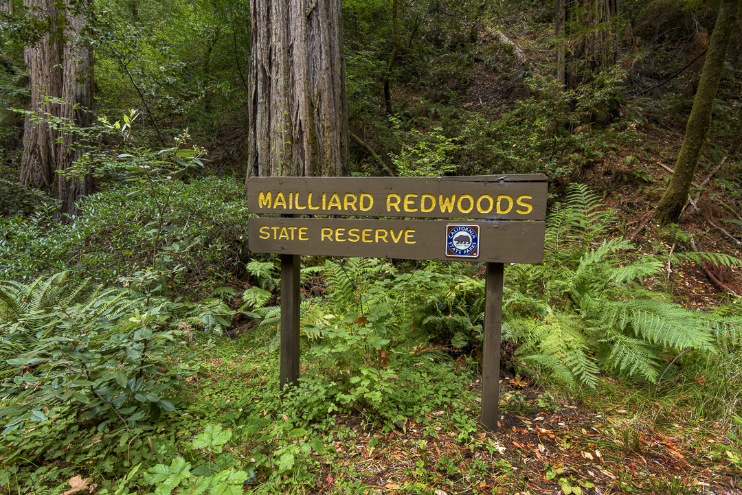 Image from Mailliard Redwoods SNR