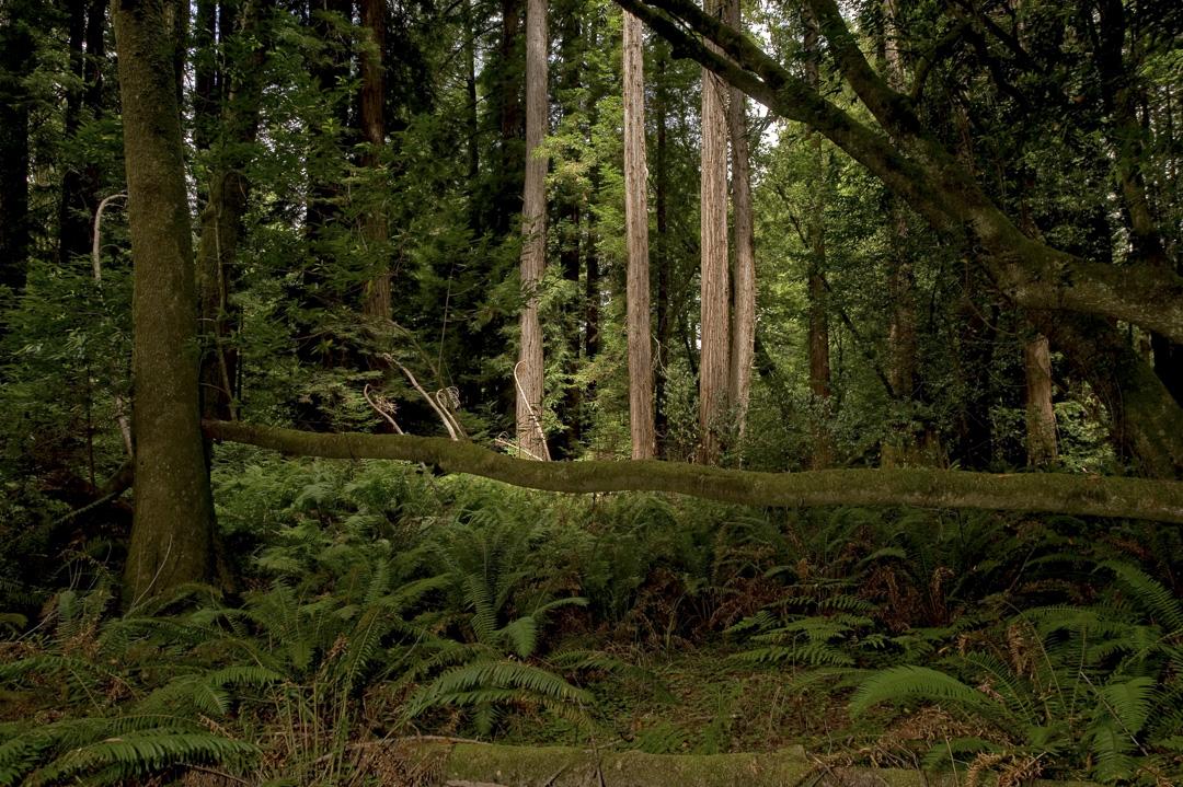 Image from Mendocino Woodlands SP