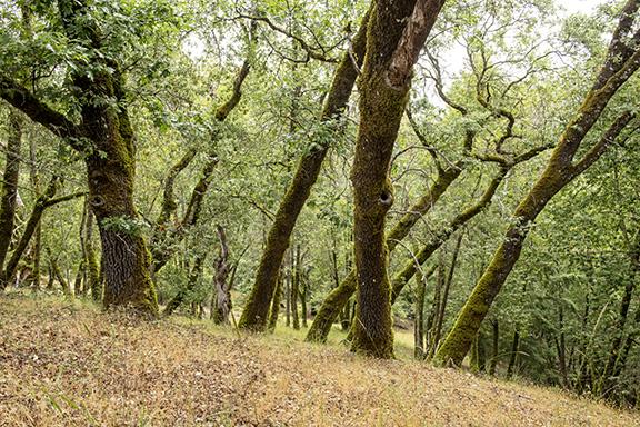 Image from Austin Creek SRA