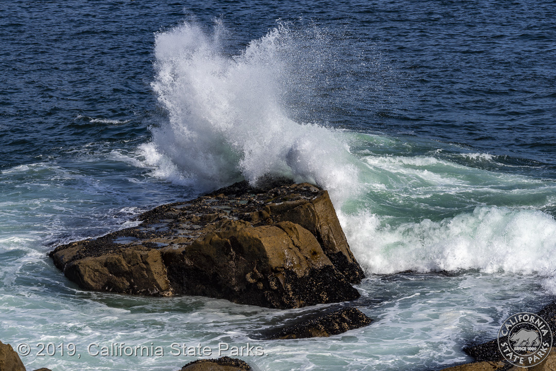 Image from Salt Point SP