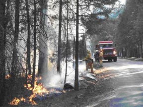 Figure 4.  In some cases it was necessary to keep fire out of old-growth pines, oaks and large dead trees.