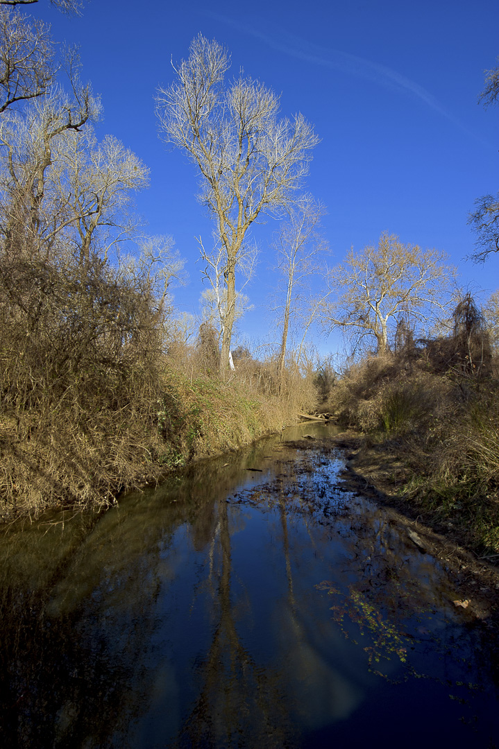 Image from Bidwell-Sacramento River SP