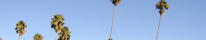 Thumbnail: Palm Trees at Olompali SHP