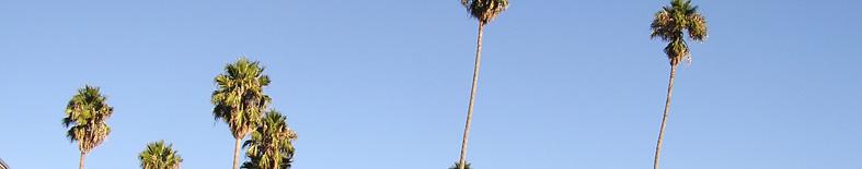 Palm Trees at Olompali SHP