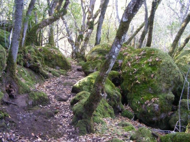 A Hilly, Rocky Hiking Trail -- The Dorn or Indian Trail