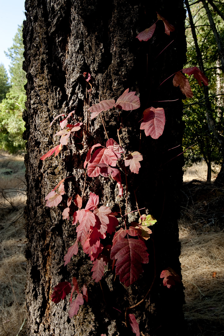 Image from Bothe-Napa Valley SP