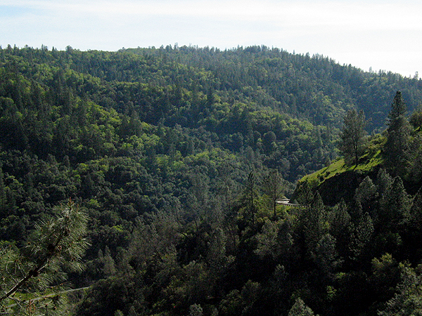 Hillside covered with dense trees in the Auburn State Recreation Area.