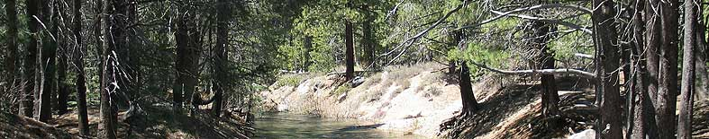 Thumbnail: View of creek through forest at Donner Memorial SHP