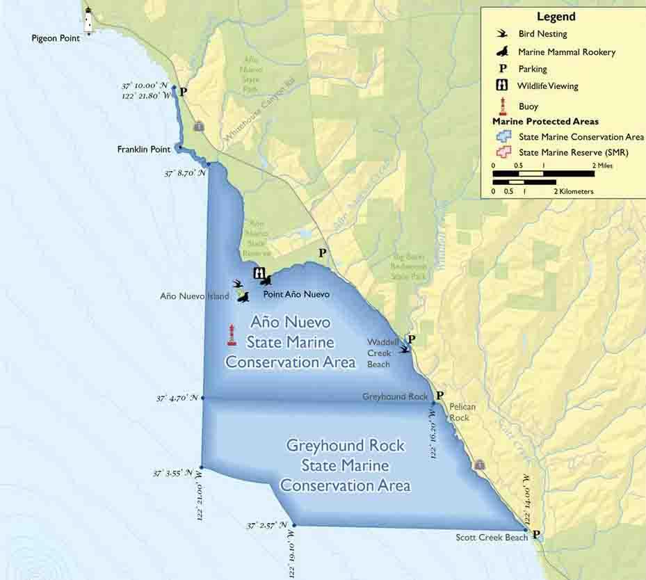 Ao nuevo state marine reserve ao nuevo state marine reserve smr publicscrutiny Gallery