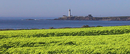 View from south bay of lighthouse across a field of clover at Pigoen Point Light Station SHP