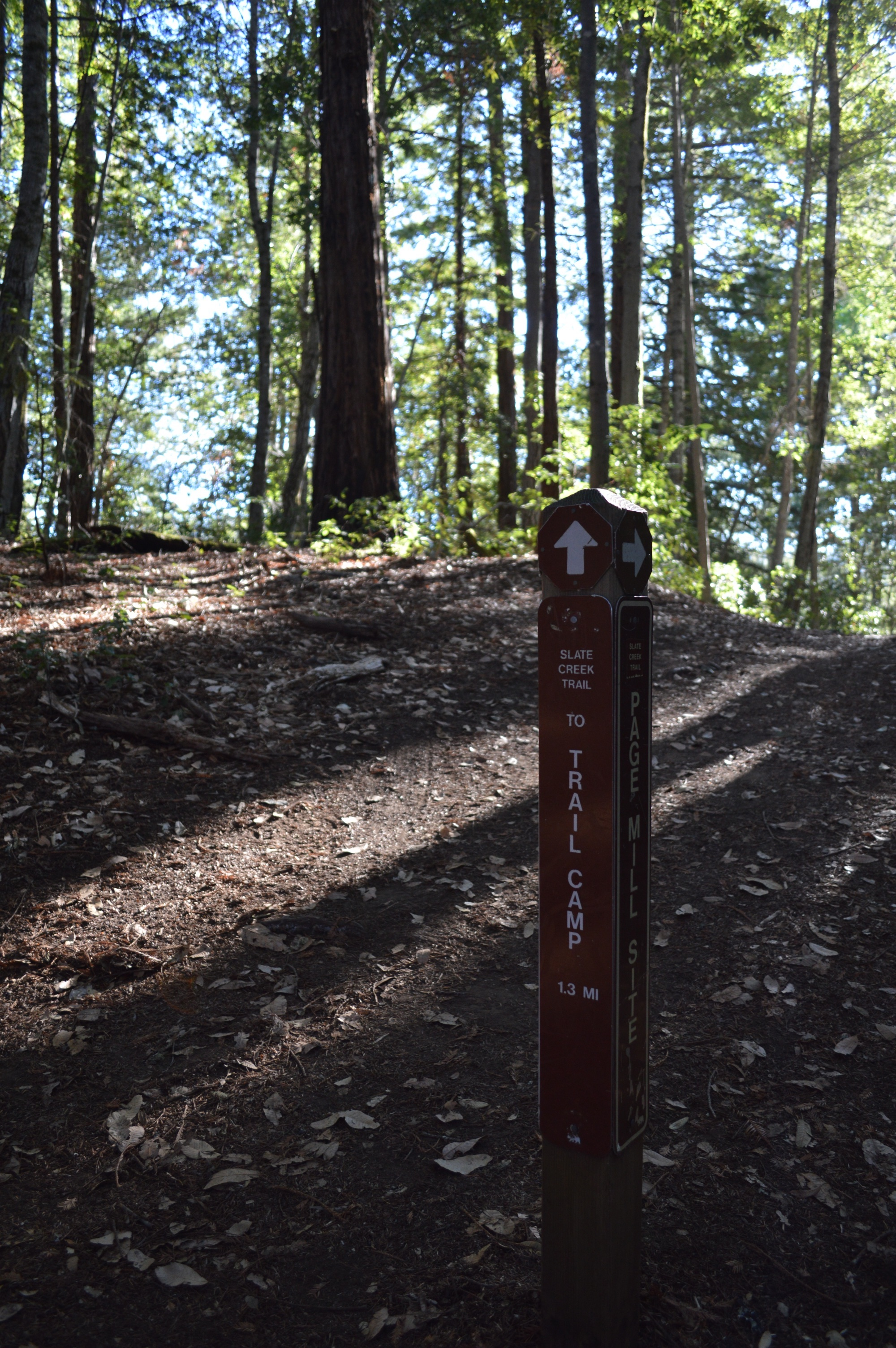 Image from Portola Redwoods SP