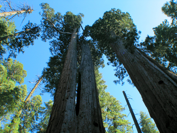 Image from Calaveras Big Trees SP