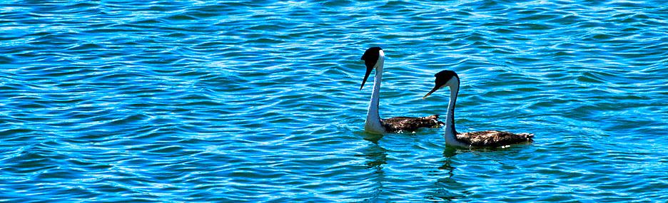 Image from Turlock Lake SRA