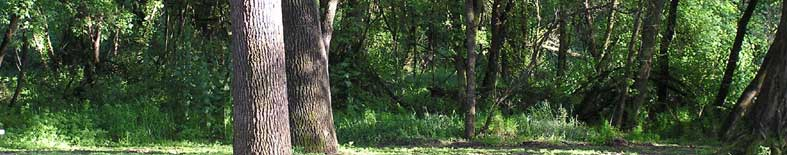 Thumbnail: View of picnic area and forest at Caswell Memorial SP